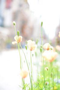 DSC_7342.blog